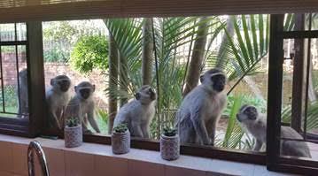 Monkey proofing